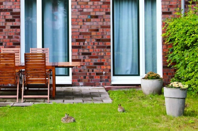 穴兔在农村地区一直处于衰退状态 但在城市里却日渐繁盛