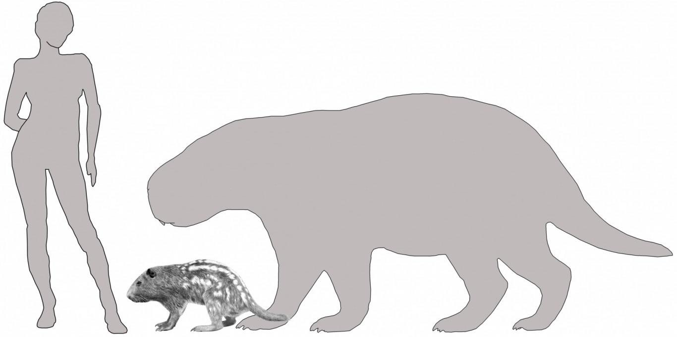 """""""Josephoartigasia monesi""""的体型与水牛一样大"""