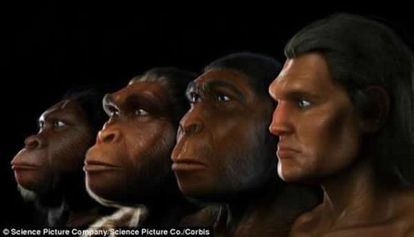资料图片:人类进化趋向身体变小脑袋变大