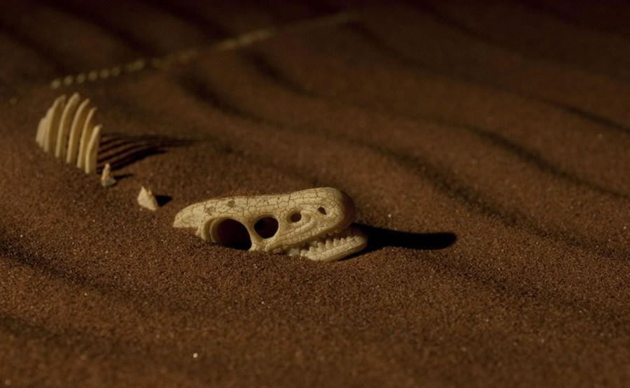 发现迄今最古老的恐龙
