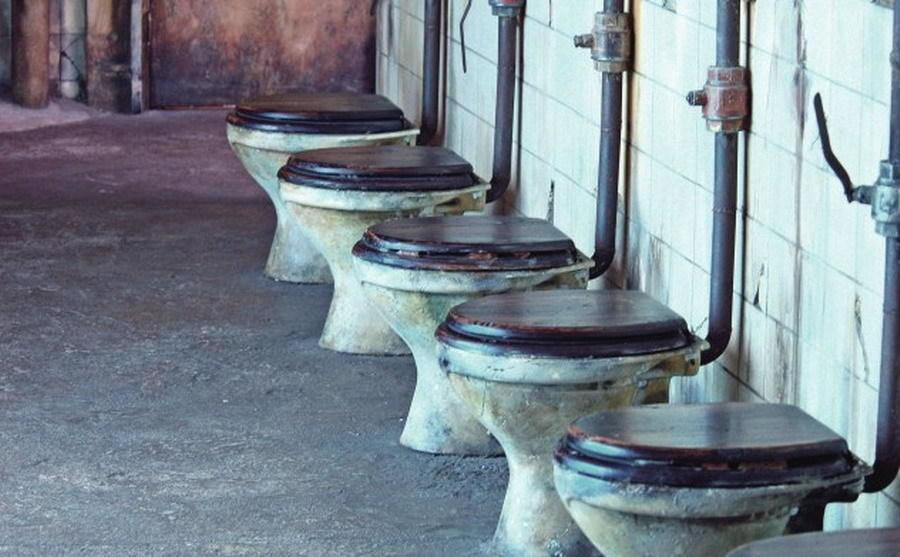 """远古动物""""公共厕所"""""""