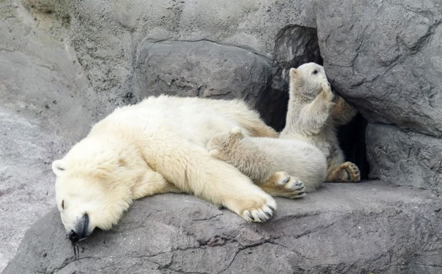 哺乳动物祖先冬眠躲过物种灭绝灾难