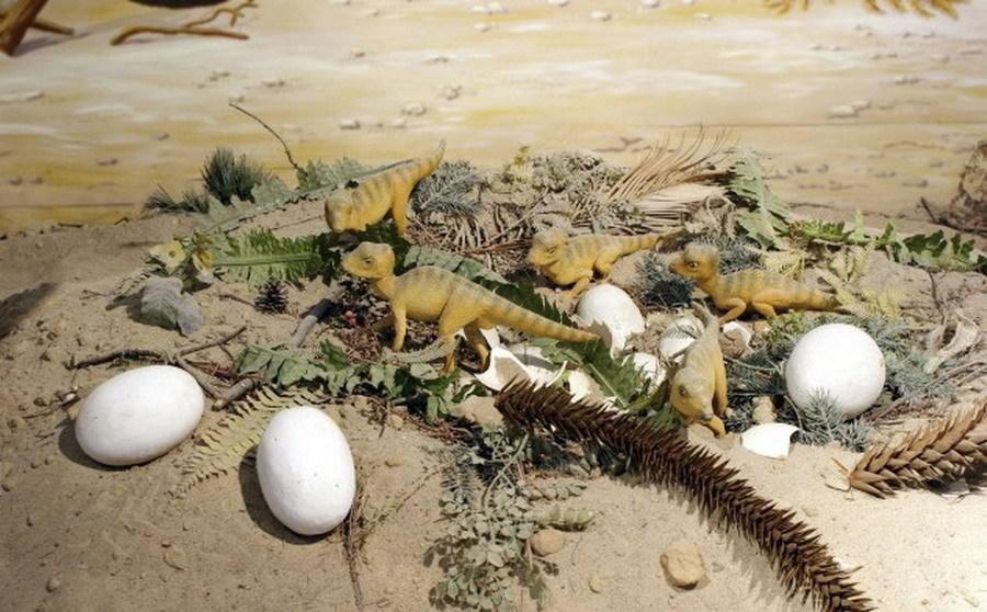 伤齿龙蛋化石暗示恐龙坐着孵化蛋