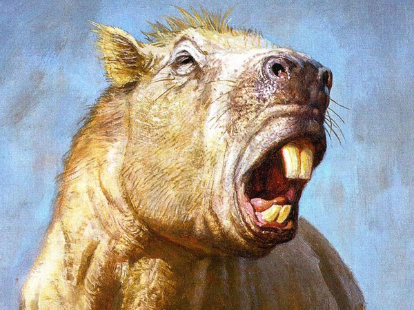 Josephoartigasia monesi是迄今发现的最大的化石啮齿类动物