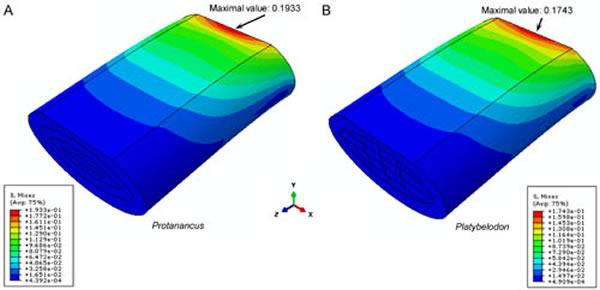 原互棱齿象(A)和铲齿象(B)下门齿的有限元力学模型 (王世骐供图)