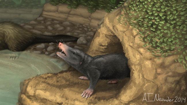 已知最早的地穴型哺乳动物:短指挖掘柱齿兽复原图