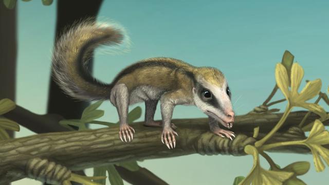 已知最早的树栖型哺乳动物:攀援灵巧柱齿兽复原图