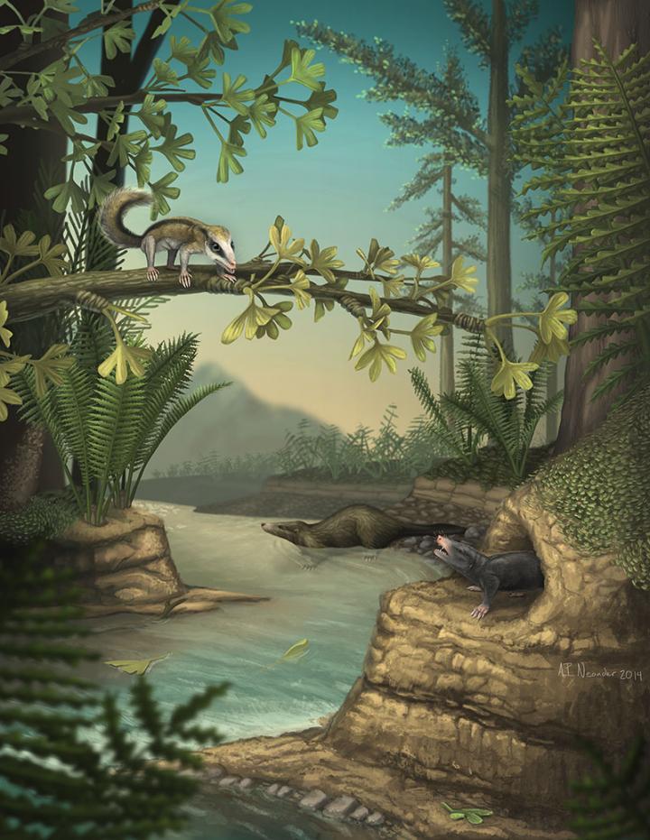 Agilodocodon scansorius(左上)和Docofossor brachydactylus (右下)生活方式和生存环境的重现