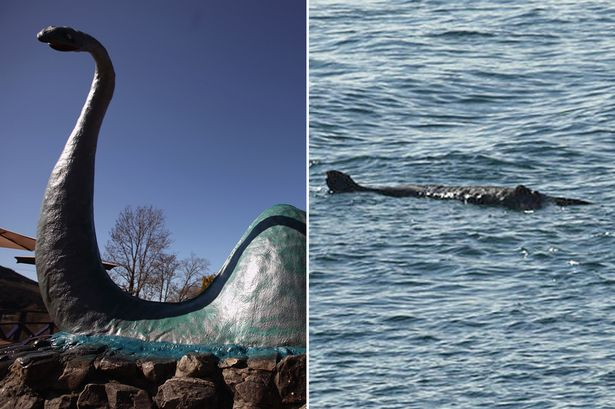英国德文郡近海惊现身长约20英尺(约6米)的大型不明生物