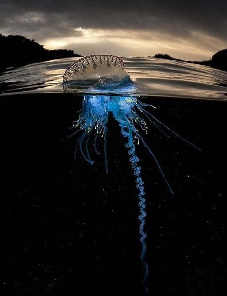同一只生物,水面和水底的情况大为不同。