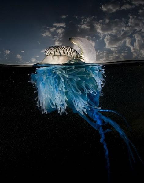 史密斯采用特别镜头,同时拍出水面和水底的情况。