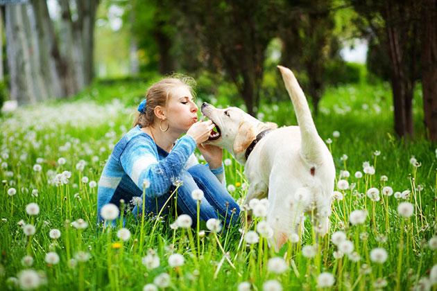 新研究显示狗可以察觉到人是不是对它们说谎