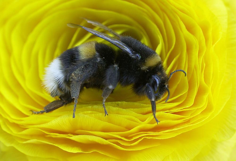 大黄蜂也会记错事