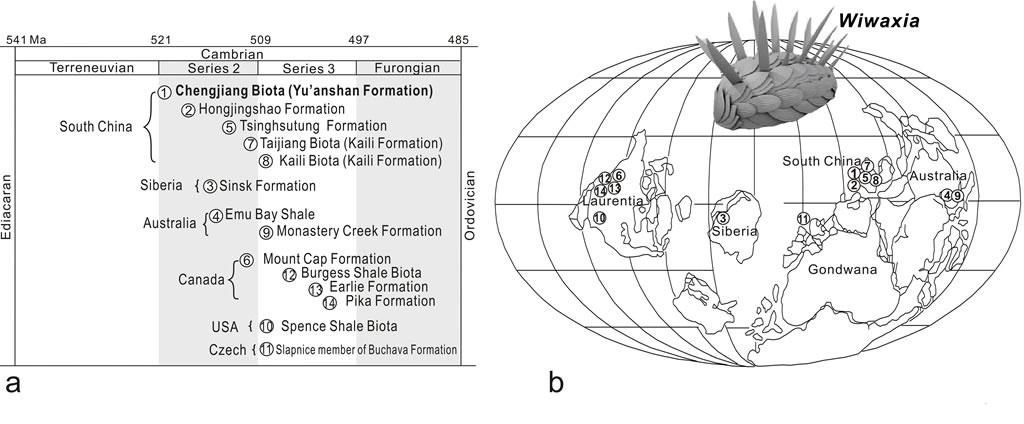 Wiwaxia化石的地层分布 (a)和地理分布(b)