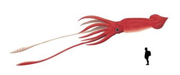 日本北海道羽幌町发现世界最大体积墨鱼和章鱼化石