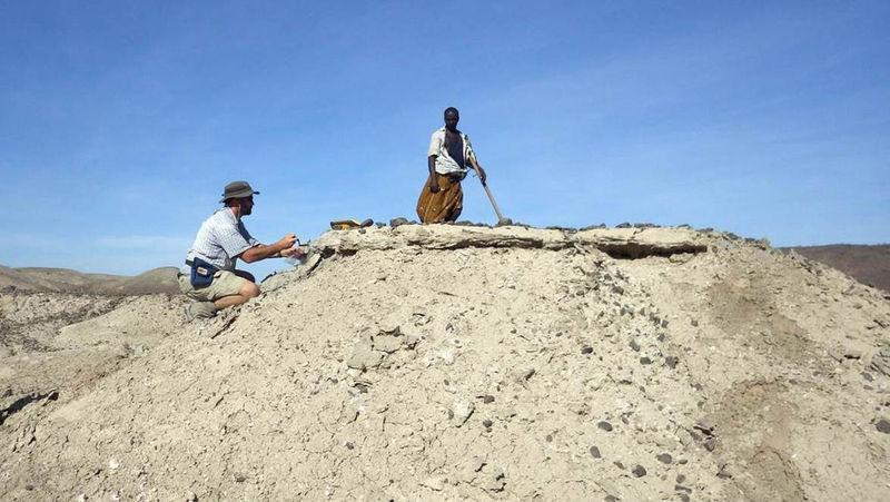 东非发现最古老人属化石LD 350-1 或改写人类进化史