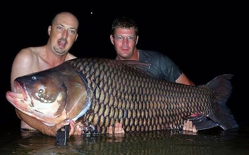 英国男子在泰国侏罗纪山垂钓胜地捕获重达156斤超大暹罗鲤鱼