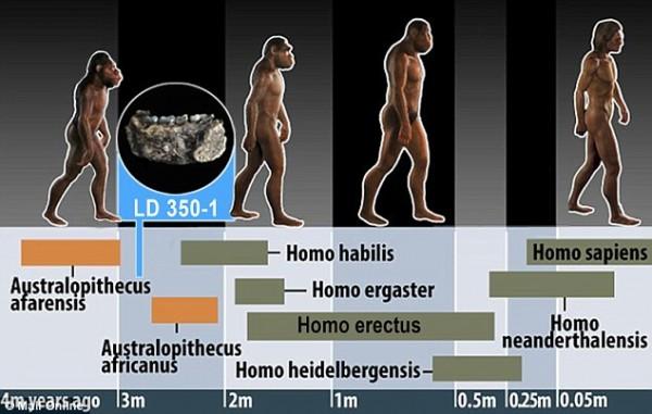 """""""人类""""出现的时间又提早几十万年 埃塞俄比亚发现的LD 350-1化石距今280万年"""