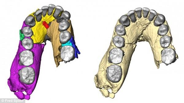 LD 350-1下颚骨化石数字重建
