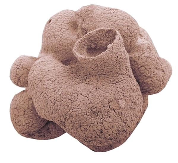 海绵的先进形态很可能延伸到寒武纪之前的6000万年