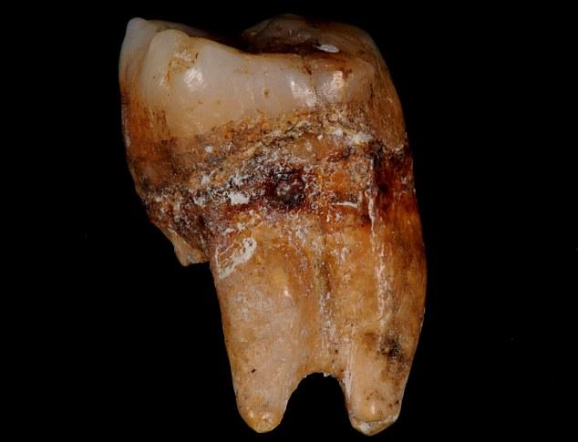 牛津大学研究人员在斯里兰卡Batadombealena洞穴发现人类牙齿化石