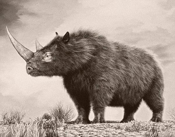 基于骨骼结构和洞穴壁画,科学家们认为成年长毛犀牛体长可达到4米。
