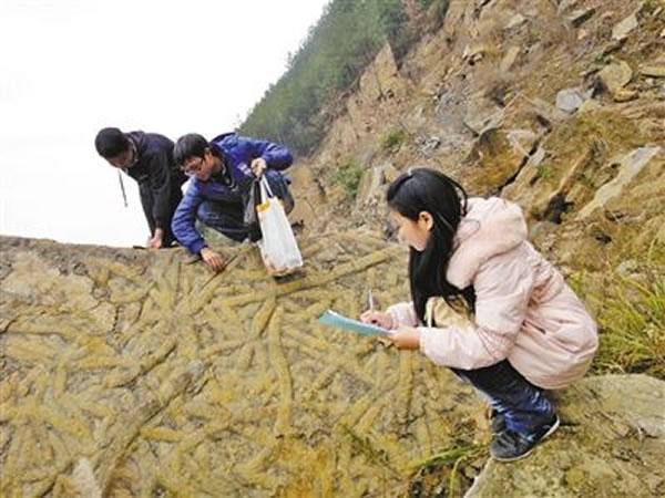 万州一中的学生们正在老师的指导下观察虫迹化石现场