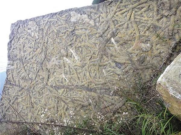 万州区铁峰乡发现的虫迹化石