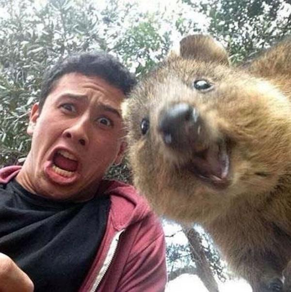 短尾矮袋鼠自拍:可爱的澳洲动物