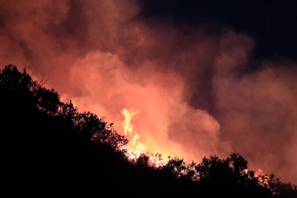 大火造成生态灾难