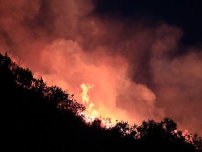 智利南部森林大火 国家自然遗产南洋杉岌岌可危
