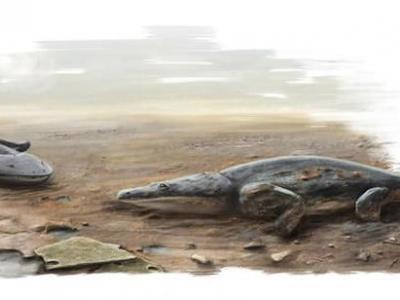 葡萄牙发现2亿年前新种蒙托龙——阿尔加维蒙托龙