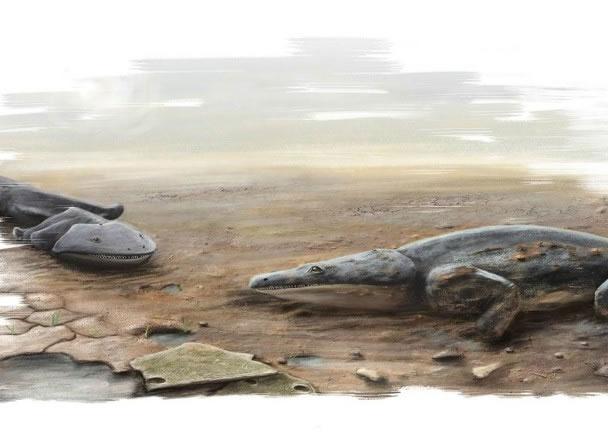 学者发现外型如蝾螈的动物化石。图为构想图。