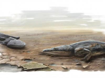 葡萄牙发现2亿年前外表像蝾螈的四足动物化石 为三叠纪顶级掠食者