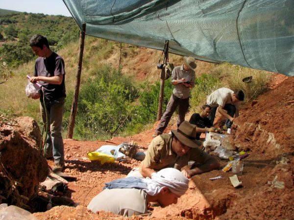 化石在葡萄牙发现。
