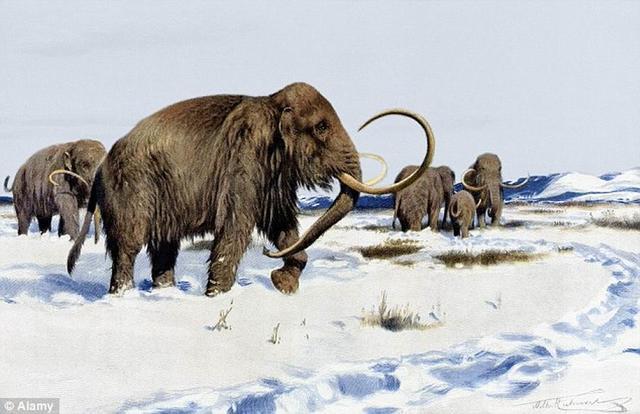 """猛犸象复活:研究人员通过新方法""""Crispr""""将14个猛犸象基因成功注入活体大象"""