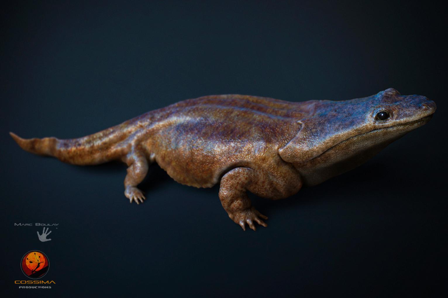 史前超级蝾螈Metoposaurus algarvensis——2亿年前的顶级掠食者