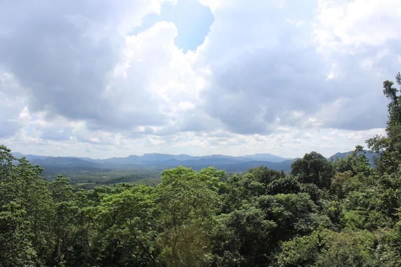 人类进入热带雨林地区生活的时间比以往认定的要早