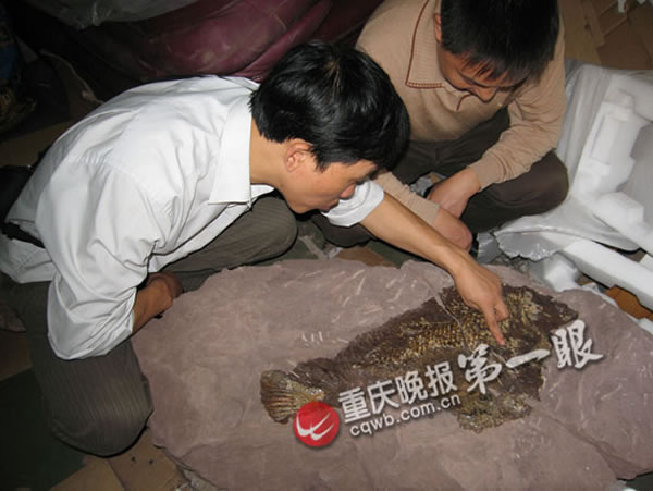 鳞齿鱼类中的新属新种——綦江北渡鱼
