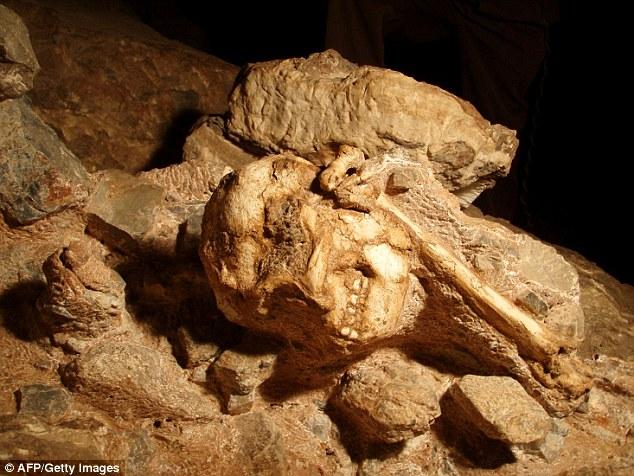 """南非斯托克方丹山洞发现""""小脚""""的化石"""