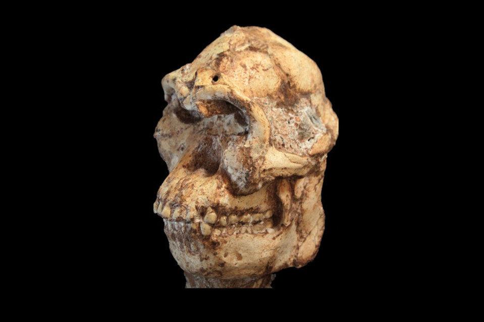 """南非""""小脚""""可能是人类始祖,属新物种命名为普罗米修斯南猿(Australopithecus prometheus)"""