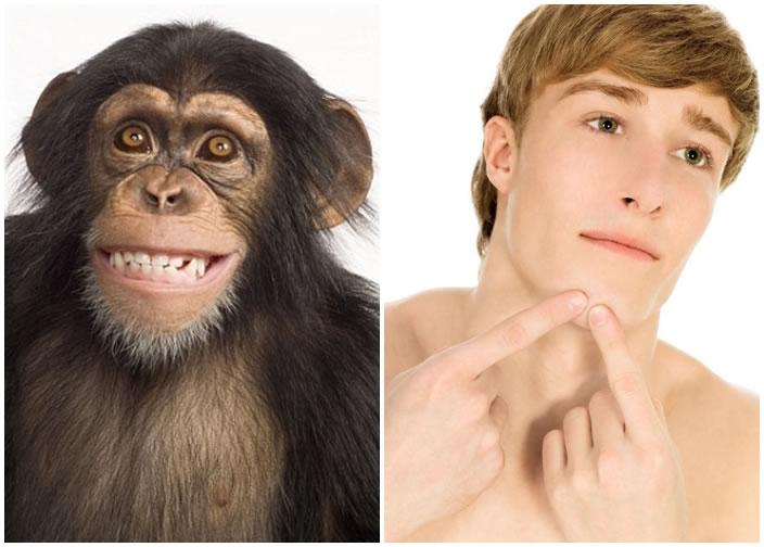 研究指人(右图)有下巴,而其他灵长类动物如长臂猿(左图)没有,是由于人懂煮食。