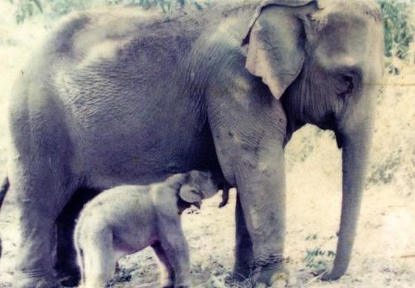 MeBai与妈妈Mae Yui,当时MeBai才1周大。