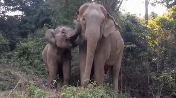 分离几年的大象母女团聚了