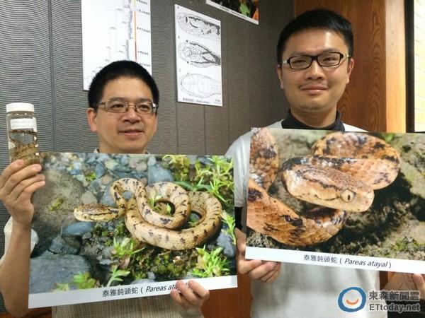 台师大生命科学系研究生游崇玮(右)、副教授林思民(左)团队发现新种「泰雅钝头蛇」。(图/记者杨佳颖摄)