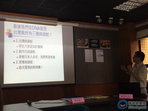 台湾新种蛇类「泰雅钝头蛇」黄眼无毒。(图/游崇玮摄,台师大提供)