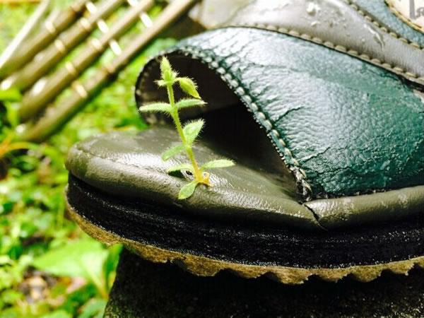 日本一只凉鞋缝隙中竟然长出植物的新芽