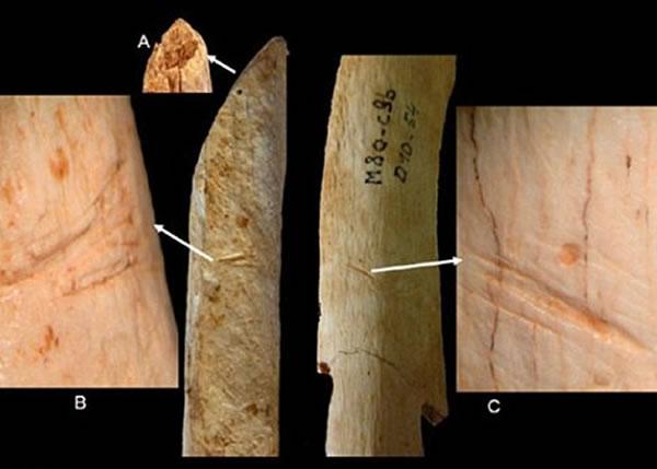 专家发现这些骸骨有着不同程度的裂痕,相信他们死后曾被同类用器具肢解。