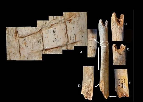 这副相信属于小童的骸骨有明显的砍痕。
