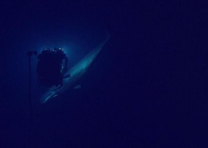 抹香鲸游近深测仪器